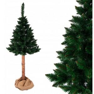 Nádherne hustá vianočná borovica na pni 150 cm