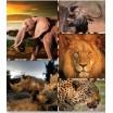 Hnedé prehozy do obývačky so zvieratami z Afriky