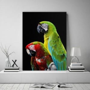 Obraz s motívom papagájov s čiernym pozadím