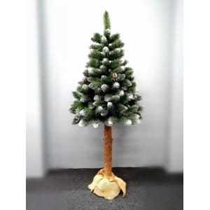 Vianočný stromček borovica na pni v zelenej farbe
